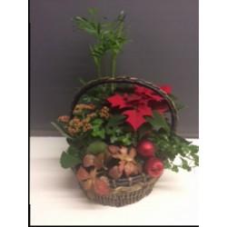 Planted Christmas Basket
